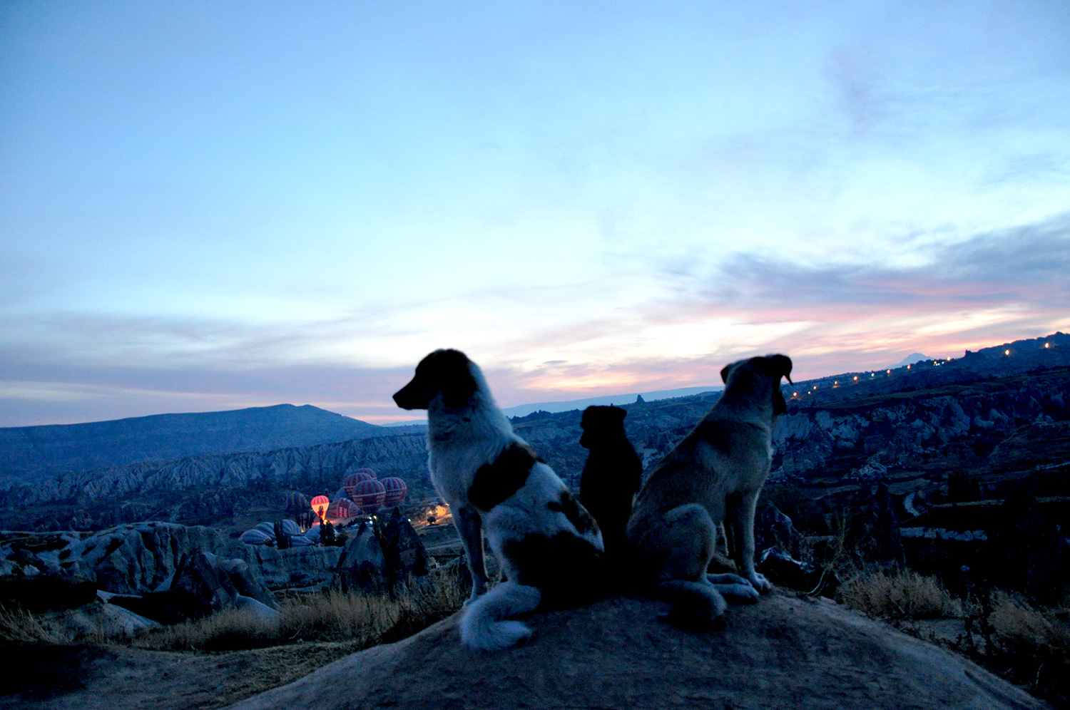 Stray dogs at sunrise in Cappadocia