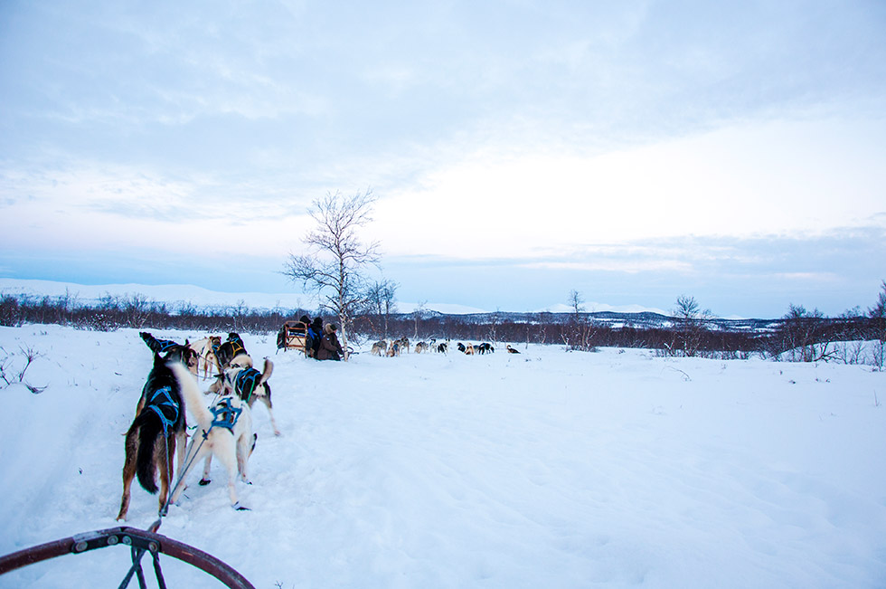 Abisko Dog Sledding - Riding at dusk