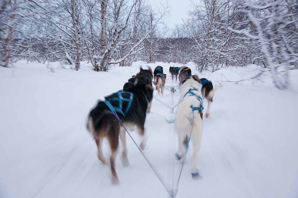 Abisko Dog Sledding - Mush!