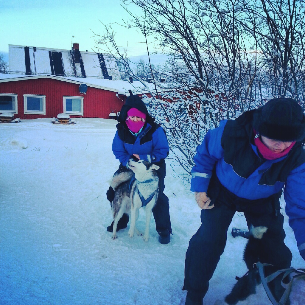 Dog sledding in Abisko