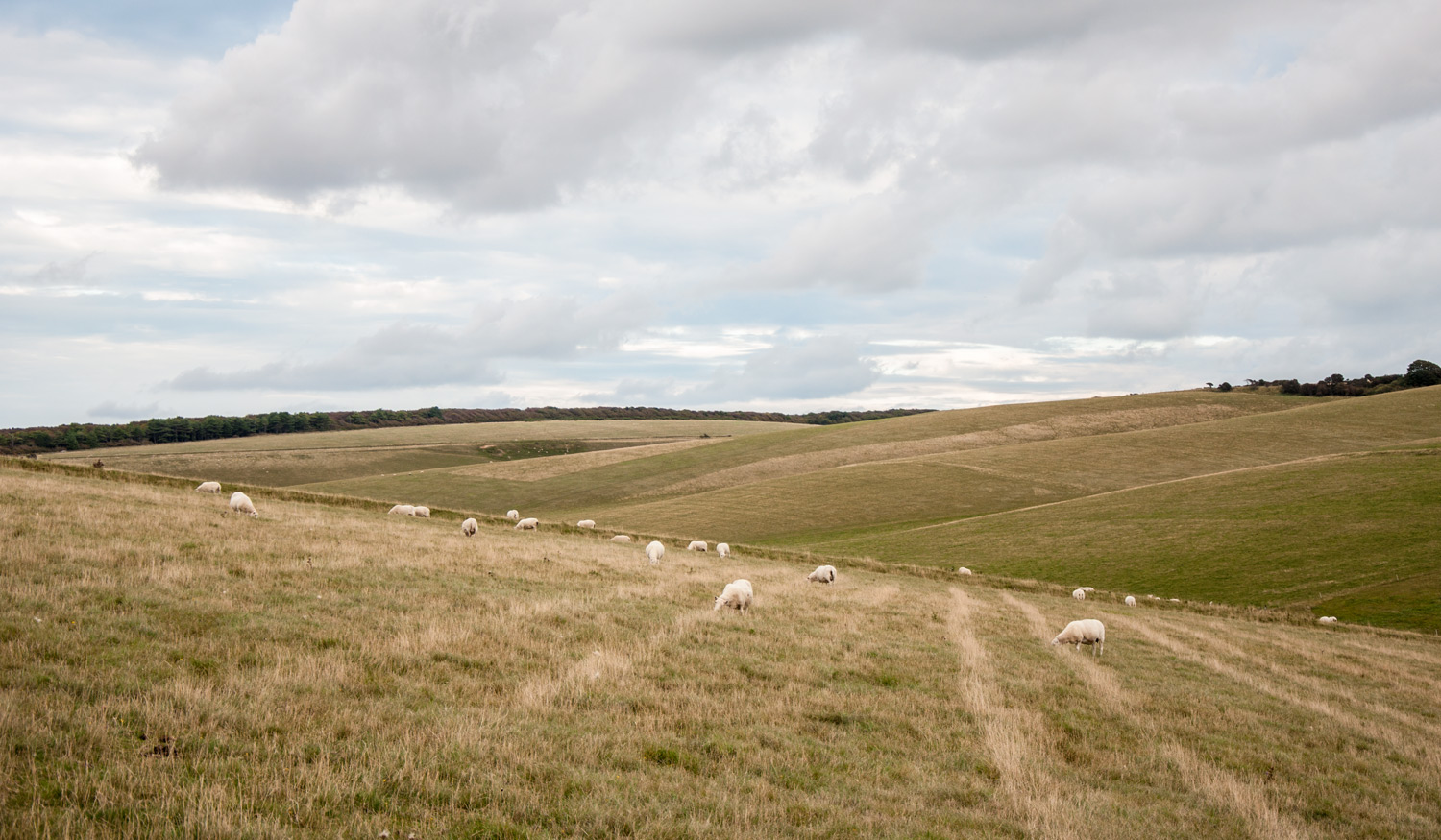 West Dean Farmland