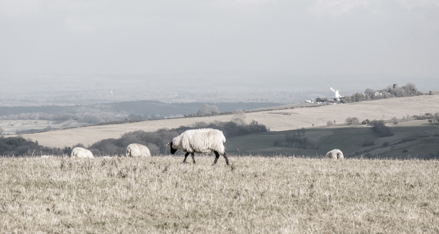 Through South Downs farmland